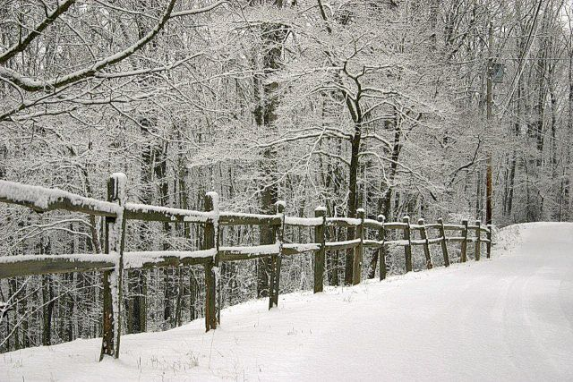 snow and woods